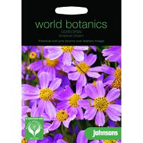 Coreopsis rosea