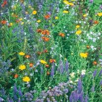 Wildflower Wildlife Mixture