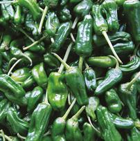Chilli Pepper Padron