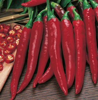 Pepper (Chilli) Rokita