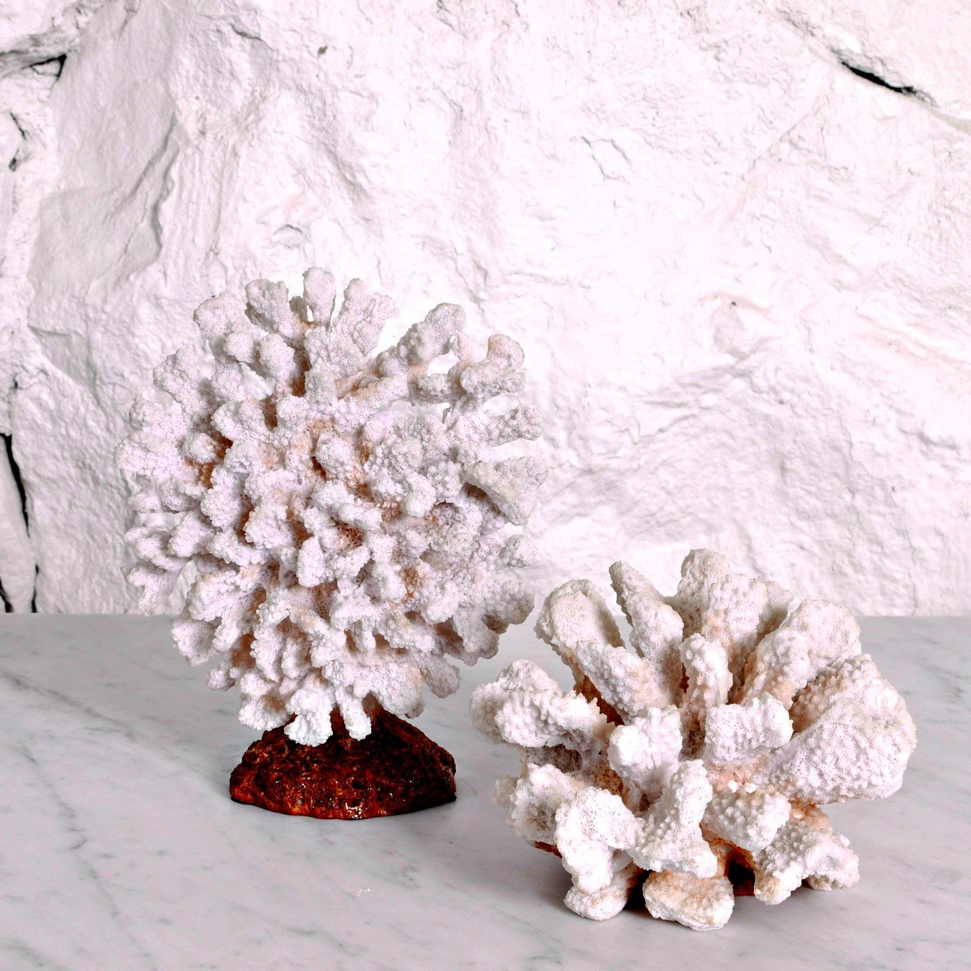 Små koraller