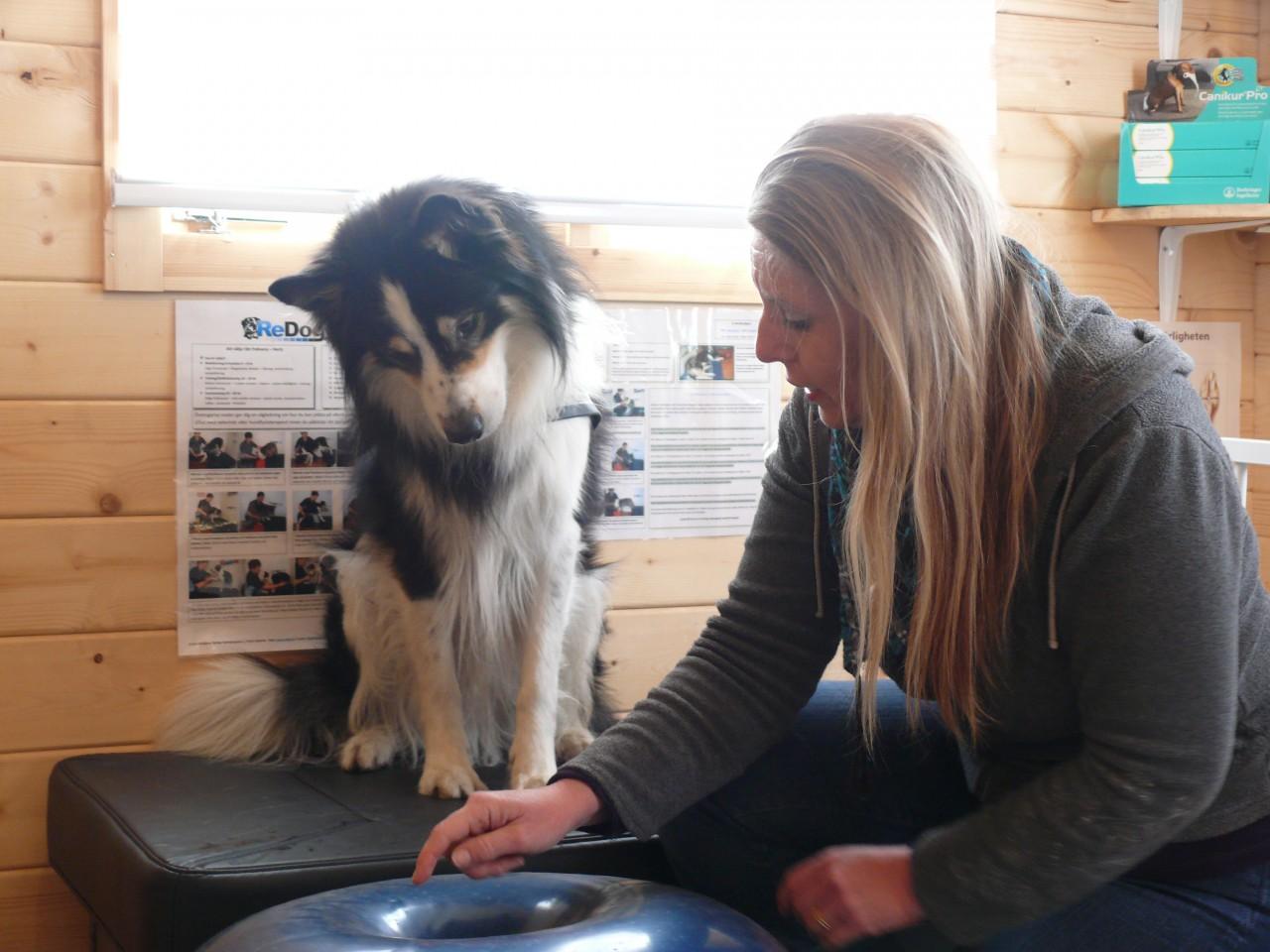 Tassen Hund : Balansbollar rehablitering friskv?rd hund mjuka tassen