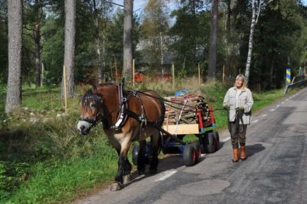 Hästvagnen har stått färdiglastad på gården och idag var det dags att köra ut veden till stugan med Liiv.