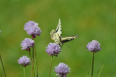 Naturen bjuder på fina vackra ting... det gäller bara att vara öppen för dem!