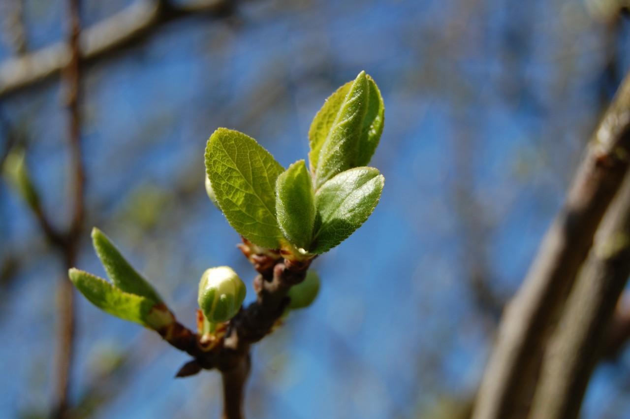 Trädgårdstjänster,din trädgård i halmstad ab