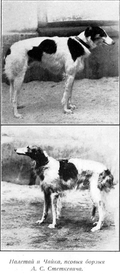 Ch Naletai och hans syster Tjaika (Zlorad u Perchino Utecha, uppf general Stetkevitch)