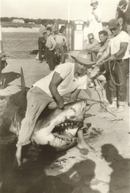 Frank Mundus var en aktiv sportfiskare som fiskade efter stora vithajar på amerikanska östkusten under flera decennier. Idag har vithajen återhämtat sig i samma område.
