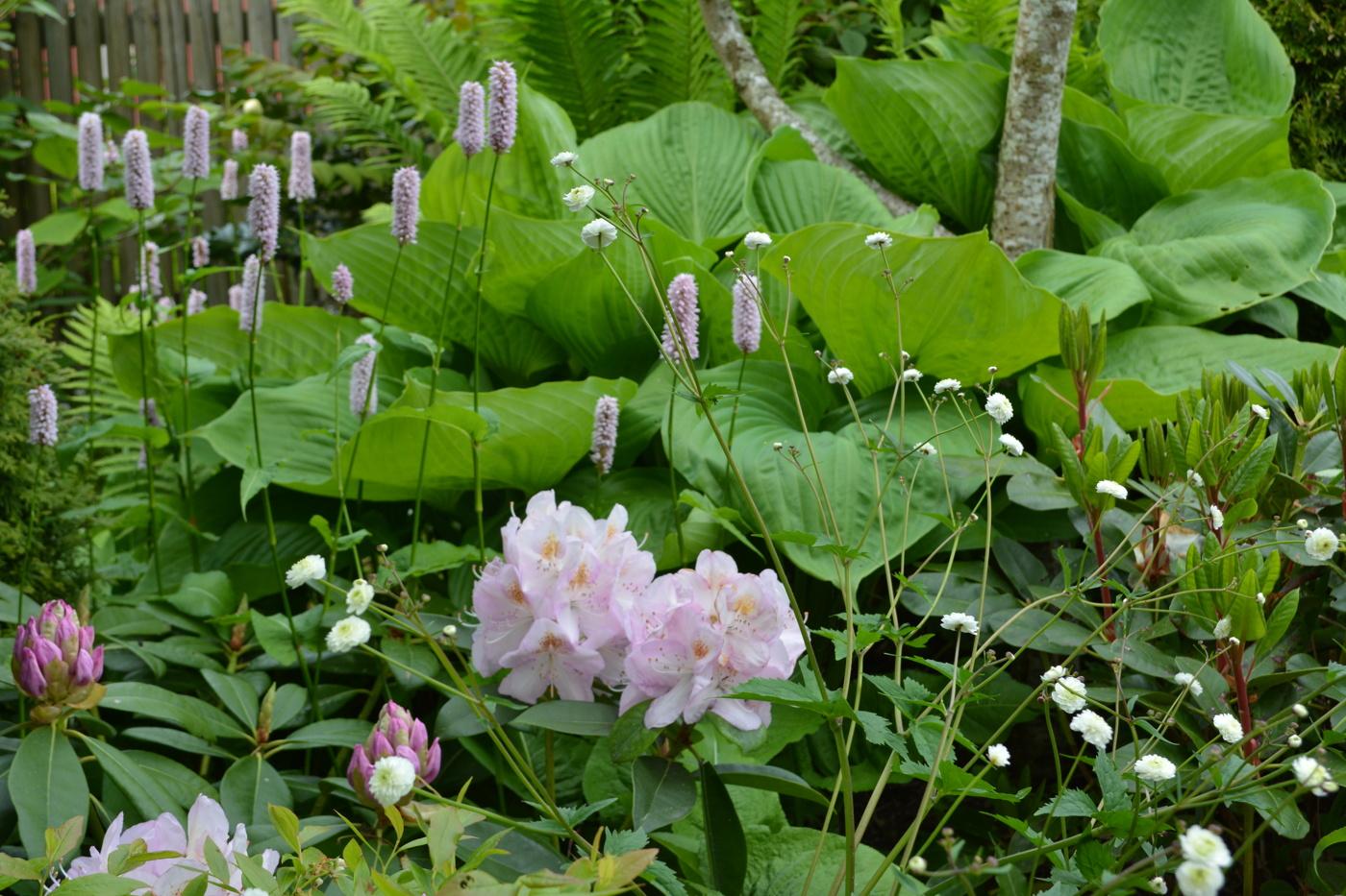 Rododendron & azalea varberg, falkenberg Рh̦r̴sen