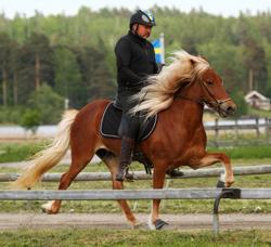 Hlökk från Skaneyland Foto: Mette Lund-Lindberg.