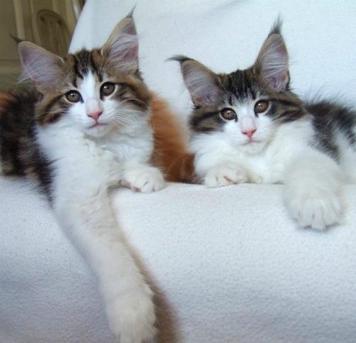 Vanilj with her sister Vallmo