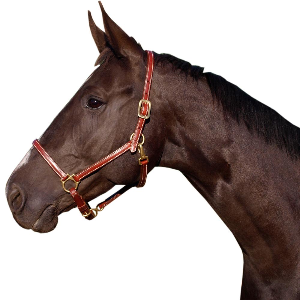 Hästar till Salu South Swedish Horse Training AB