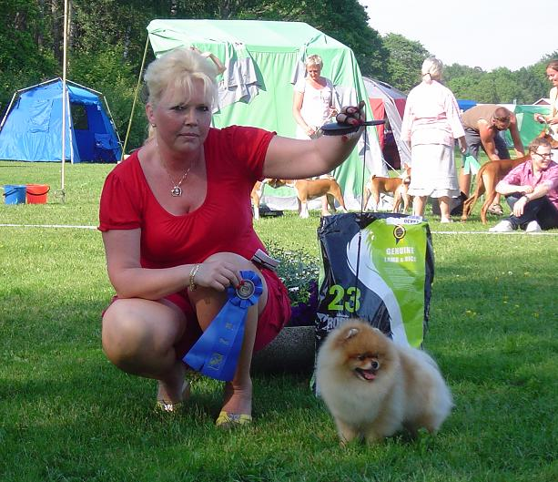 International Canadian Finnish Estonia Swedish Danish Champion # 1 Pomeranian in Sweden 2007 Sunterra Spontaneous Daystar  Born 23 May 2003  Patellaluxation Free 0/0