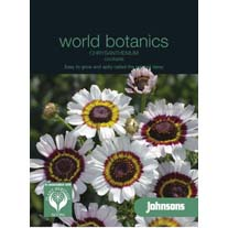 Chrysanthemum carinatum Asteraceae