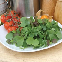 Mixed Leaves 'Gourmet Garnish' ('Micro-Greens')