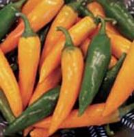 Chili (Hot) Bulgarian Carrot