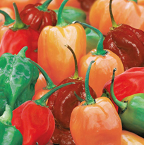Chilli Pepper Hotscotch