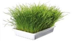 Mjukt Kattgräs vitaminberikad,