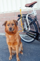 Cykelset Easy Active DogMotion