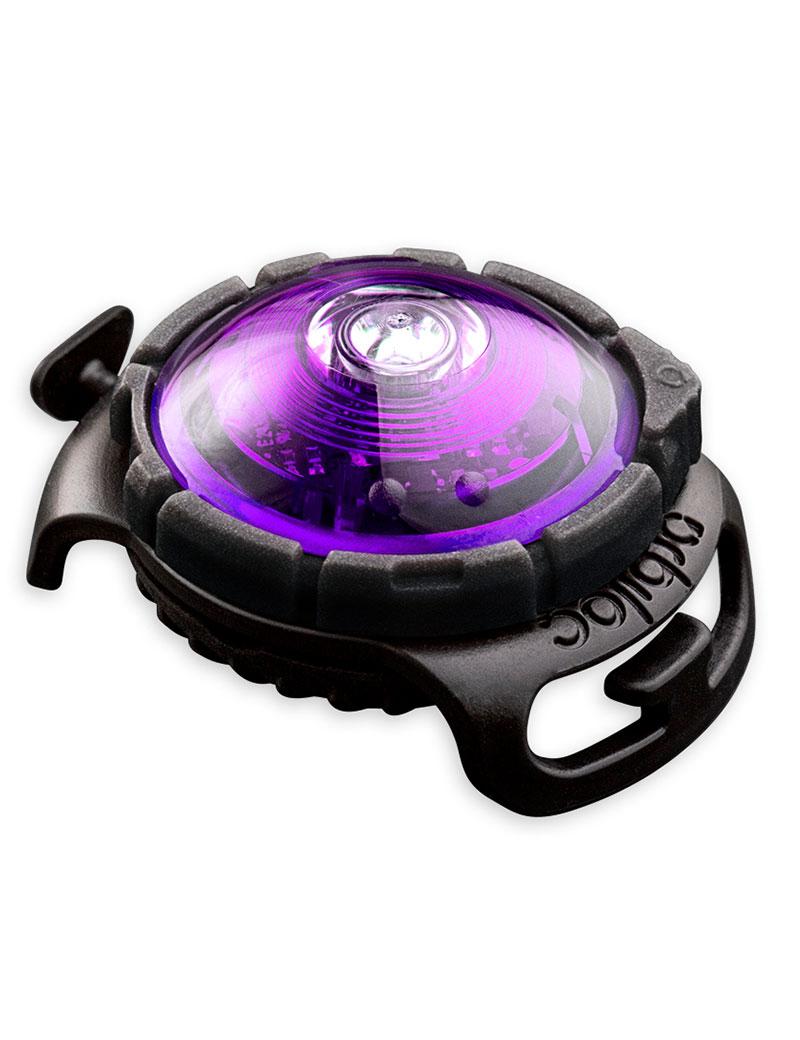 orbiloc-dog-dual-purple
