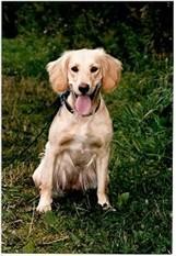 Till hundgruppen kommer det många olika hundar, det kan vara sociala färdiga familje hundar, men även hundar som kräver lite extra