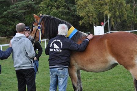 Det är uppfödare Lennart Bengtsson  som ger Leka en kram. Något som är helt unikt är att Lennart Bengtssons hästar har varit med i tävlingen 4 gånger. Lavina 22927 årets kallblod 2002, Leia 23275 representerade nordsvensken 2007, Lazer 2025 representerade rasen 2012. Och 2013 årets kallblod Leka .