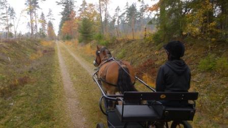 Höstens färger är lika vackra som hästen. Stilla, tyst, det enda som hörs är hovarnas kras mot grus... nja lite prat med..Då blir man kavat!