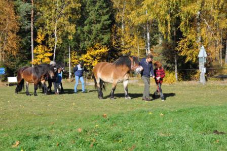 Hästarna hämtas i hagen. Det är bra att bekanta sig innan turen och hjälpa till och göra i ordning hästarna.