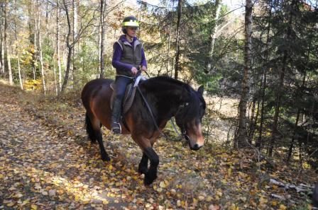 Anne rider på Fanny. Premiär för ridtur med nordsvensk häst!