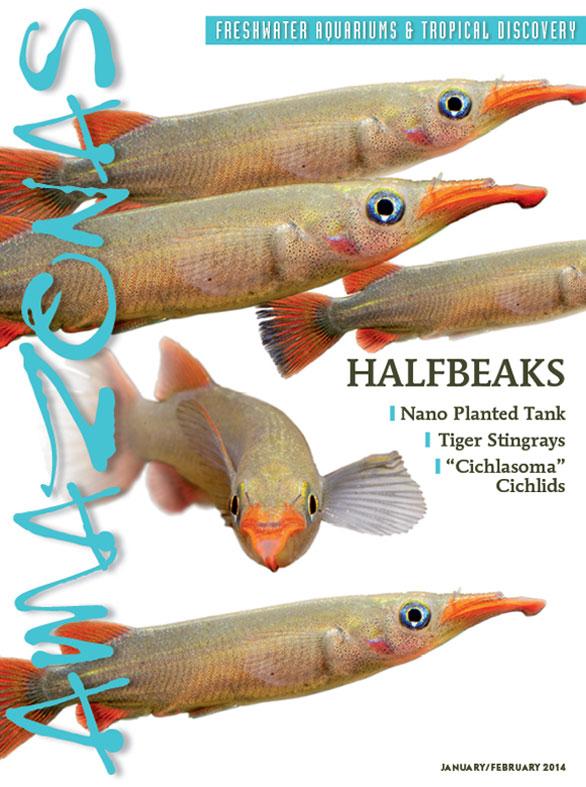 A-3-1-Halfbeaks-Cover-Full