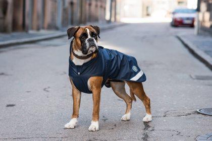 Hundregntacke-pippi-blue3