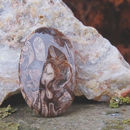 fossil rock calcy