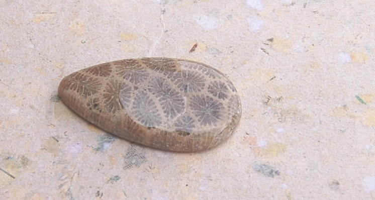 Fossil korall  jasper