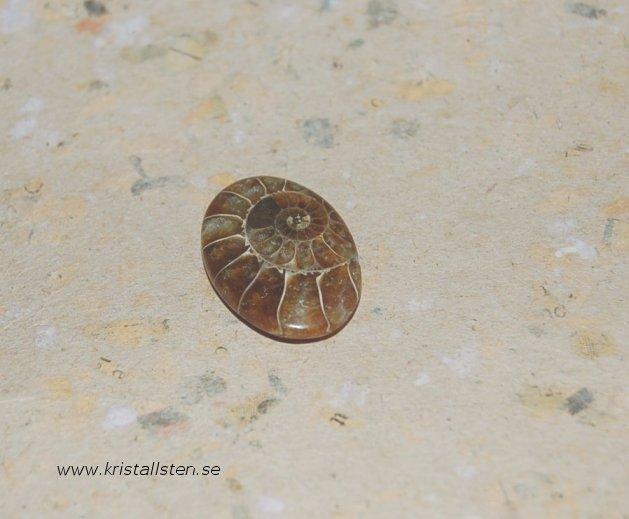 Ammonite4-27x19mm 2