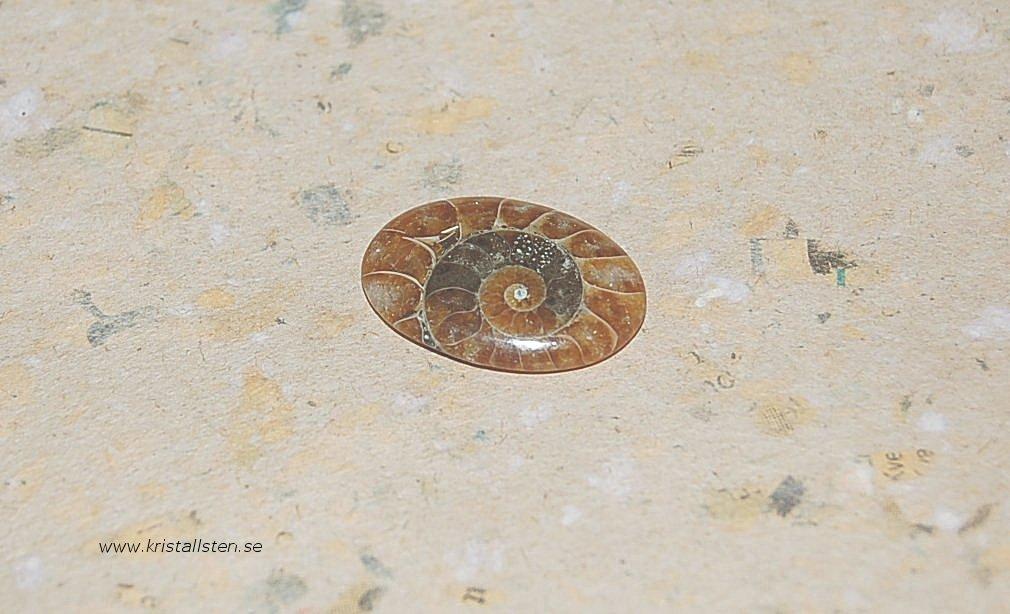 Ammonit5-27x19mm 2
