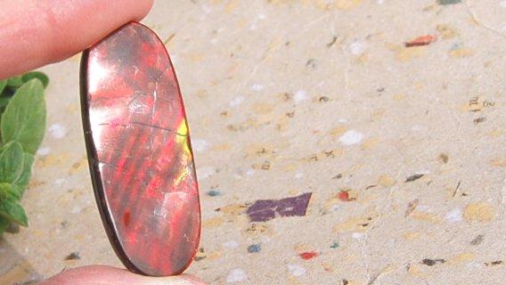 Kanadisk fossil röd Ammolit 2