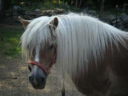 Hårmineralanalys häst - Hårmineralanalys häst