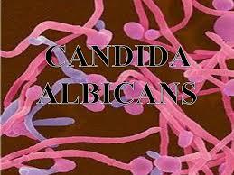 Immuno Candida - Immuno Candida