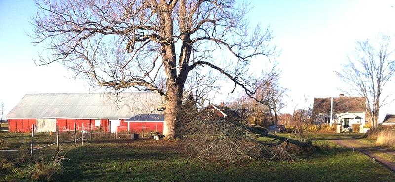 Bild Uppsala 2013, foto Ulla Karlsson, Uppsala, Altorp, Svarvarebacken, Ljungstorp - efter stormen i oktober 2013.