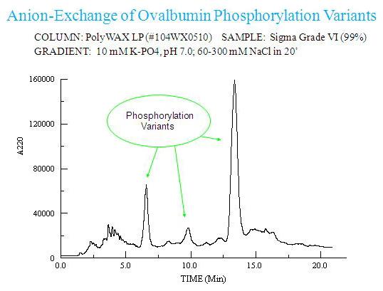Anion-Exchange of Ovalbumin Phosphorylation Variants
