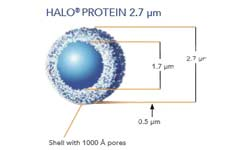 HALO Protein 2.7µm