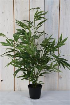 bambu-konstväxt
