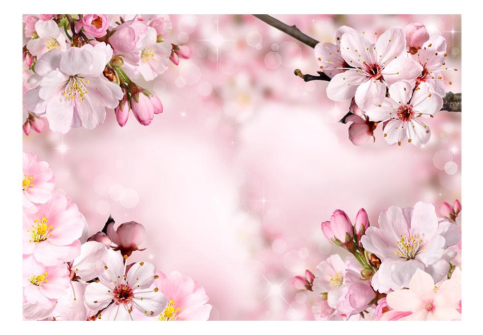 Fototapet - Spring Cherry Blossom1