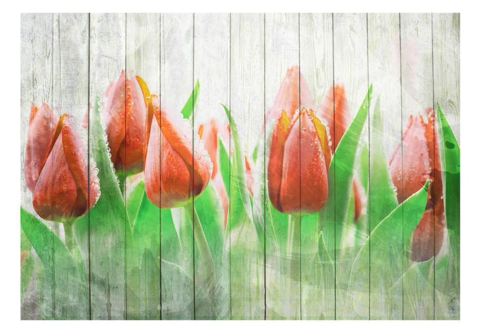 Fototapet - Red tulips on wood1