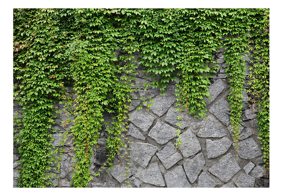 Fototapet - Green wall