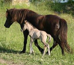 Mother Katla with her newborn son, Keilir