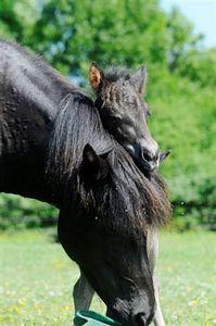 Little Gnótt loving her mother Gnípa