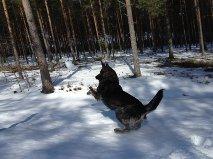 Rixi leker och trivs i snön