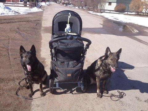 RixDivans Axa och Gråmanns Rixi på promenad med Elliot han kan känna sig trygg med dessa brudar vid sin sida=)
