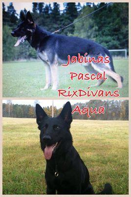 jabinas Pascal och RixDivans Aqua
