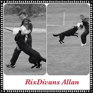 Allan och husse har presterat fint i IPO 3